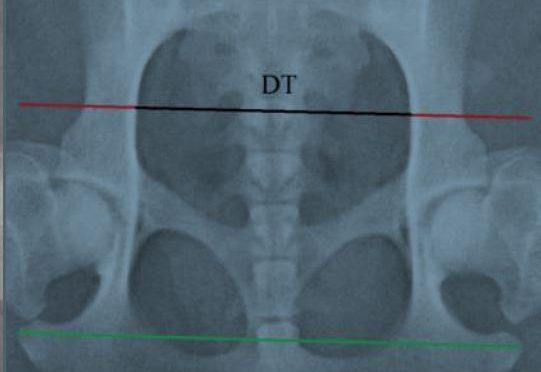 Osallistu! Narttujen lantion röntgenkuvaus-projekti saa jatkoa